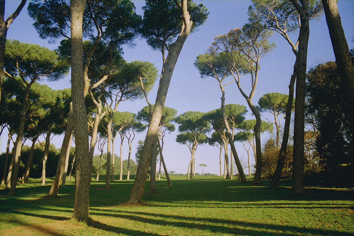 "Vivien Bittencourt, ""Winter (Doria Pamphili series),"" 2001-02."